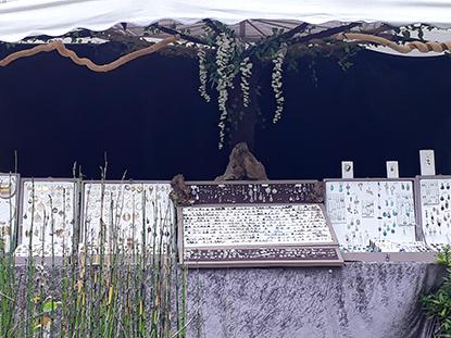 trésors sylvestres